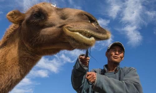 Un cammello con il suo padrone nella provincia di Omnogovi, nel deserto del Gobi, in Mongolia.