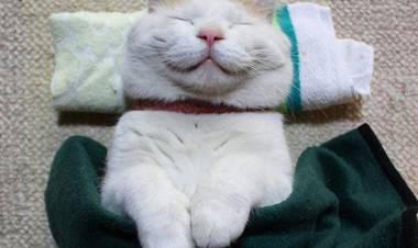 Giappone, questi gatti realizzati in lana sembrano veri