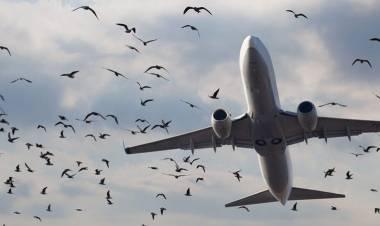Bird strike: perché l'impatto tra aerei e uccelli è pericoloso?